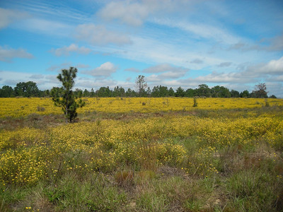 Fall brings a profusion of wildflowers