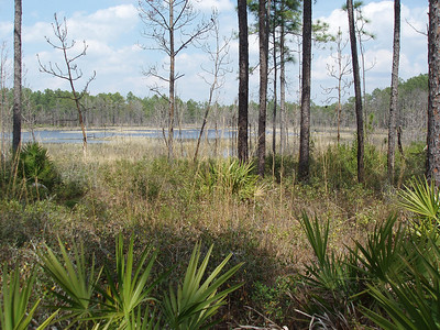Flatwoods pond, Royal Trails (Bob Coveney)