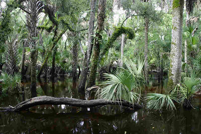 Myakka River State Park (Kurt Gildemeister)